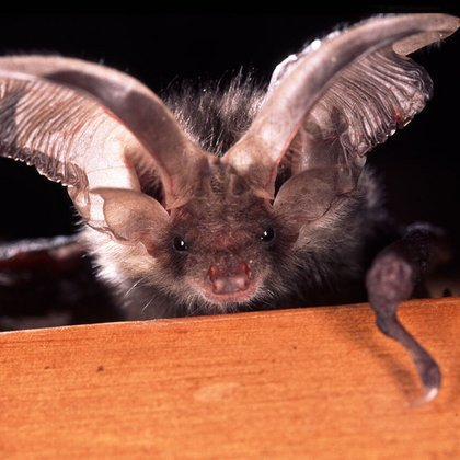 Homes for bats